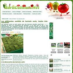 Les variétés de haricots verts
