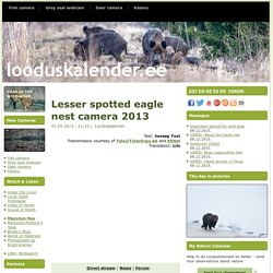 Lesser spotted eagle nest camera 2013