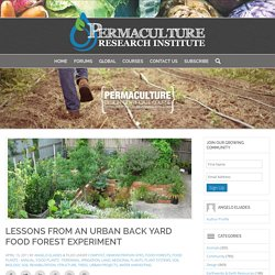 Lessons from an Urban Back Yard Food Forest Experiment