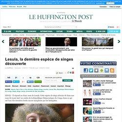 Lesula, la dernière espèce de singes découverte