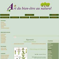 Lexique des plantes médicinales : Saponaire
