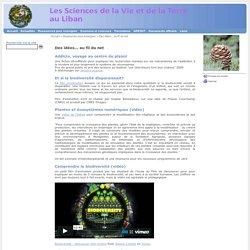 2011 - SVT au Liban - Tous droits réservés - Des idées... au fil du net
