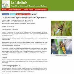 La Libellule Déprimée (Libellula Depressa)