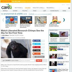 Watch Liberated Research Chimps See the Sky for the First Time