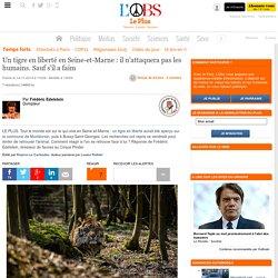 Un tigre en liberté en Seine-et-Marne : il n'attaquera pas les humains. Sauf s'il a faim