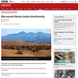 Bat-sound library tracks biodiversity