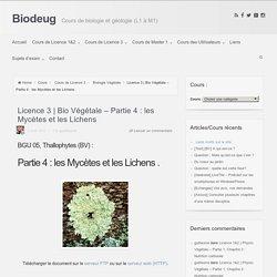 Bio Végétale – Partie 4 : les Mycètes et les Lichens