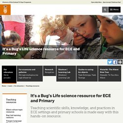 It's a Bug's Life science resource for ECE and Primary