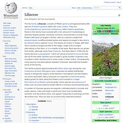 WIKIPEDIA - Liliaceae.