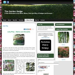 Lilly Pilly - The Best Australian Native Hedge Plant | The Australian Garden Hedge
