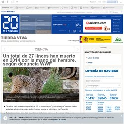 Un total de 27 linces han muerto en 2014 por la mano del hombre, según denuncia WWF