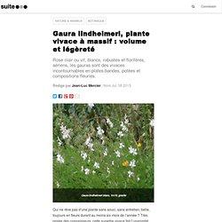 Gaura lindheimeri, plante vivace à massif : volume et légèreté