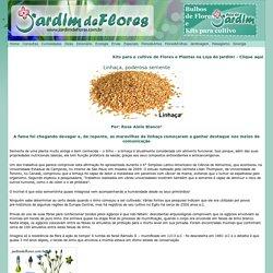 Linhaça: a semente poderosa