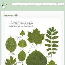 » Linneas egen sida Linnea i målarens trädgård