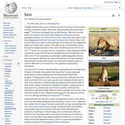 Lion hybrids