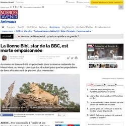 La lionne Bibi, star de la BBC, est morte empoisonnée
