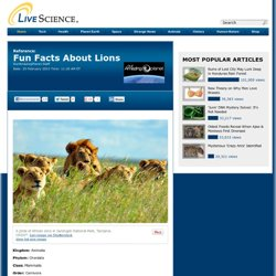 Lions: Facts & Information About Lions
