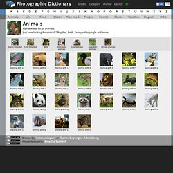Dictionary of Animals | Photographic Dictionary