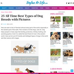 25 List of All-Time Best Types of Dog Breeds with Pictures