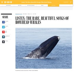 Listen: The Rare, Beautiful Songs of Bowhead Whales