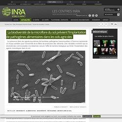 INRA DIJON 18/03/15 La biodiversité de la microflore du sol prévient l'implantation de pathogènes alimentaires dans les sols agricoles
