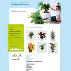 Listing des plantes dépolluantes