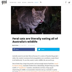 Feral cats are literally eating all of Australia's wildlife