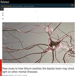 New clues to how lithium soothes the bipolar brain may shed light on other mental illnesses