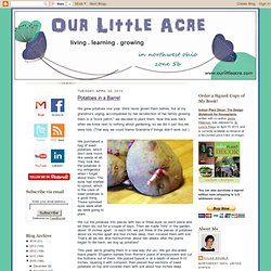 Our Little Acre: Potatoes in a Barrel