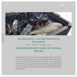 Live Bait Selection by Fish Species - Bait Up