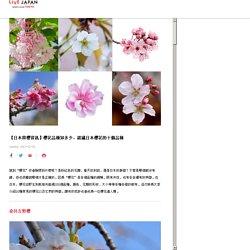 【日本賞櫻資訊】櫻花品種知多少,認識日本櫻花的十個品種 - LIVE JAPAN