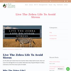 Live The Zebra Life To Avoid Stress