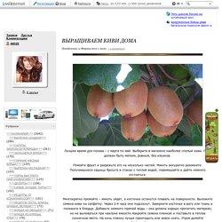 Выращиваем КИВИ дома. Обсуждение на LiveInternet - Российский Сервис Онлайн-Дневников