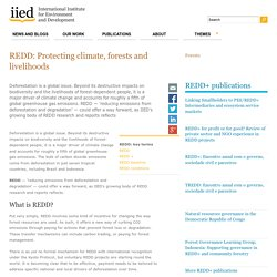 REDD: Protecting climate, forests and livelihoods
