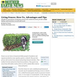 Living Fences: How-To, Advantages and Tips - Modern Homesteading