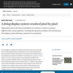A living display system resolved pixel by pixel