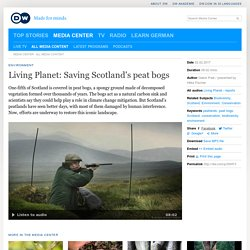 Living Planet: Saving Scotland′s peat bogs
