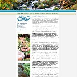 www.livingwaterflowforms.com/livingwater.htm