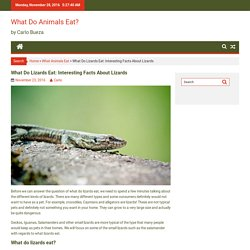 What Do Lizards Eat: Interesting Facts About Lizards