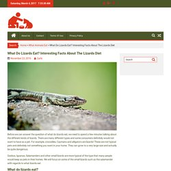 What Do Lizards Eat? Interesting Facts About The Lizards Diet