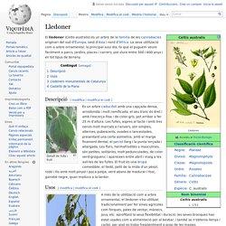 Lledoner