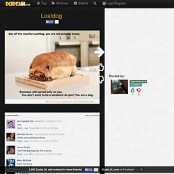 Loafdog | Dude LOL