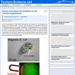 □ Guider et localiser des bactéries en les rendant magnétiques