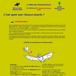 L'écho-location des Chauves-souris - Deux-Sèvres Nature Environnement