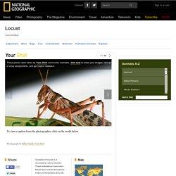 Locusts, Locust Pictures, Locust Facts