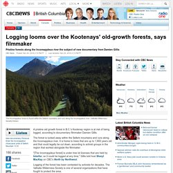 Logging looms over the Kootenays' old-growth forests, says filmmaker