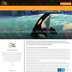 Lolita, l'orque solitaire, doit retourner chez elle - One Voice