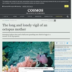 The long and lonely vigil of an octopus mother