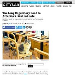 The Long Regulatory Road to America's First Cat Cafe
