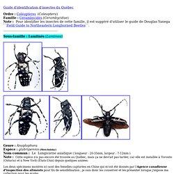Les insectes du Québec - photos de longicornes asiatiques